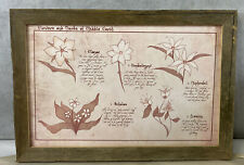 Lord Of The Rings Flowers & Herbs Of Middle Earth Map Poster Framed Signed 19x13
