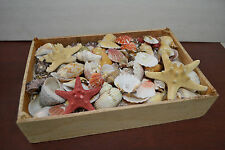 1000+ Pcs Assort Mix Sea Shell Starfish With Wood Box Beach Decor Craft