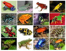 FROGS-COLORS (MOST ARE DEADLY) PHOTO-FRIDGE MAGNETS