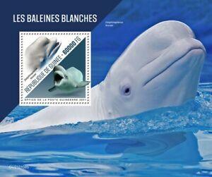 Guinea - 2021 White Whales, Beluga - Stamp Souvenir Sheet - GU210108b