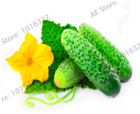 Mini Cucumber Bonsai Japanese Vegetable Plants Organic Garden 100 PCS Seeds New