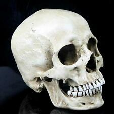 Human Skull Replica Realistic Size Halloween Decoration Life Model Resin Head