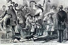South American ANIMAL AUCTION 1869 Crocodile Armadillo Monkey Snakes Birds Art