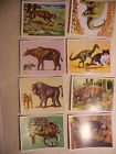 album PANINI vignette ANIMAUX PREHISTORIQUES 92 lot 8 immage Prehistoric Animal