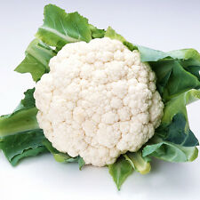 White Cauliflower Seed 50 Seeds Brassica Oleracea Vegetable Garden Seed Hot C006