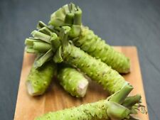 100Pcs Japanese Horseradish Wasabi Seeds Acute Vegetables Bonsai Burning Plants