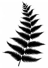 Tropical Fern Leaf Stencil