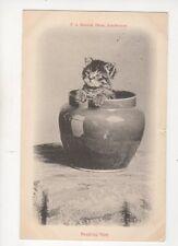 Peeping Tom 1907 Cat Postcard FA Bourne 265b