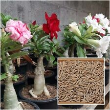 Adenium Obesum 20 Seeds, Desert Rose, Obesum Mixed Color Seeds, Flower Perennial
