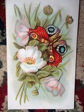 Postcard Butterfly Floral 1909 1 cent Green Stamp Vintage
