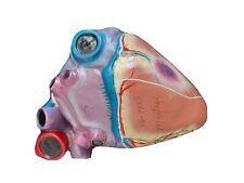 Vintage Carolina Biological Master Heart Anatomical Model