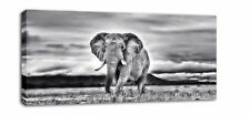 """EXTRA LARGE ELEPHANT CANVAS WALL PICTURE PRINT 44"""" XL"""
