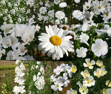 WILDFLOWER MIX WHITE - 1 Oz Bulk Seeds
