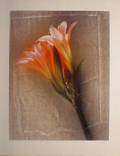 art print~AMARYLLIS~Lg~Shoji Yoshida~flowers~metallic brushed metal floral 24x32