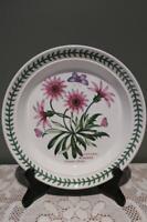 Portmeirion England Stunning Shallow Dish / Plate - Gazania Ringens - Vgc