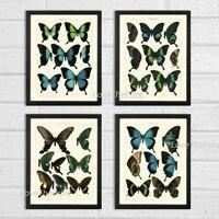Unframed Butterfly Print Set of 4 Antique Blue Butterflies Home Wall Art Decor