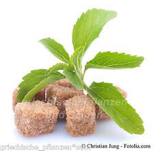 Stevia Rebaudiana Plante Substitut de Sucre 0 Calories 100 Graines Frais