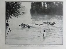 WW1 1915 FRENCH CAVALRY HORSES CROSSING RIVER - CHAMPAGNE  The Great War Print