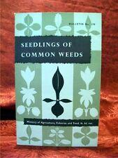 IDENTIFICATION OF SEEDLINGS OF COMMON WEEDS, Bulletin 179; MAFF, HMSO; 1st 1959