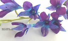 "Dendrobium (SINGAPORE) ORCHIDS ""Real Touch"" - BLUE / PURPLE - EOFY  SALE OFFER"