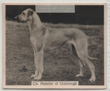 Great Dane 1930s Champion Dog Breed Canine Pet Ad Trade Card