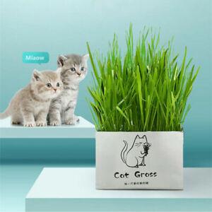 Soilless Organic Catgrass Cat Grass Snack Growing Kit Cat Grass Planting Bag