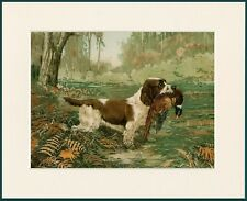 ENGLISH SPRINGER SPANIEL AT WORK GREAT DOG PRINT MOUNTED READY TO FRAME
