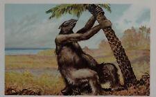 c1900 TEDESCA STAMPA MEGATHERIUM PREISTORICO DINOSAURO ANIMALE der Urwelt