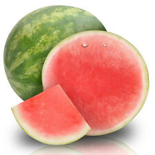 watermelon Seeds Seedless watermelon sweet juice very tasty easy growing 50x
