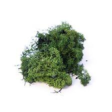 500g Dark Green Finland Moss Natural Treated Floristry & Crafts