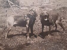 Antique Vintage Bloodhounds Dogs Kneebone Collar Buddies Pals Tlc Rppc Photo