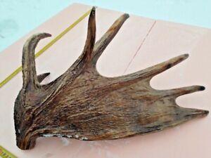 Elk antlers, Deer antlers, (horn, knife, carving, chewing, taxidermy)