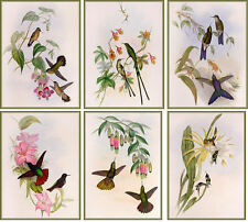 Card Toppers Hummingbird Selection - Glossy Finish Card Making Toppers
