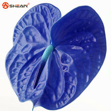 100 Rare Blue Anthurium Seeds Indoor Potted Hydroponic Flowers Plant Seeds