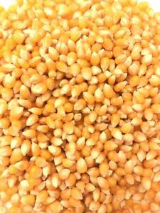 100% Natural Non GMO Popcorn Seeds/Kernels/Popping Corn, Maize Kernels,500g-25Kg