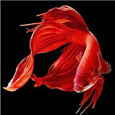 5D Red Fish Diamond Painting Full Drill Embroidery Crafts Kits Wall Decor Gifts