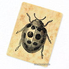 Lady Bug Deco Magnet, Decorative Fridge Ladybug Refrigerator Decor Mini Gift