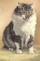 BF38729  cat chat  animal animaux