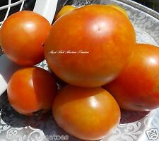 Red Robin Dwarf Heirloom Tomato Non-Gmo Organic Garden Organic Fresh 50 Seeds