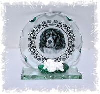 Black & White Springer Spaniel round cut Glass plaque   Cellini-Plaques #5