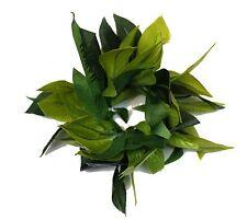 Hawaiian Lei Party Luau Writband hand Flower  Maile King All Green Hula Leaf