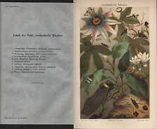Chromo-litografía 1909: extranjeros las cigarras. chicharra zirpe micrófono insectos