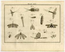 Antique Print-XCIV-MAYFLIES-SHADFLY-PHRYGANEIDAE-Houttuyn-Linnaeus-Philips-1767
