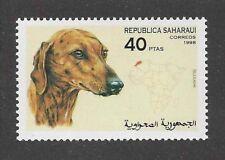 Dog Art Head Portrait Postage Stamp SALUKI SLOUGHI Spanish Sahara 1998 MNH