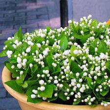 20pcs Jasmine Sambac Jasminoides White Shrub Aromatic Flower Seeds Plant