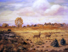 COLORADO WHITETAIL giclee print by Richard R. Nervig