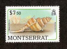 Montserrat--#695 MNH--1988 Sea Snail Shell