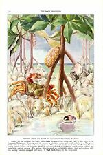 Vintage Scarce Hashime Murayama Fish Print ~ Oyster Mangrove Crab Cowery ~
