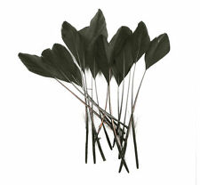 """10 pcs Stripped Coque Feathers Millinery and Crafts 5-7""""  BLACK"""