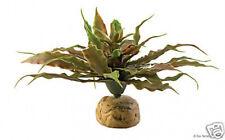 Exo Terra Terrarium Desert Ground Plant  Star Cactus